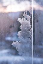 Frost som ligner et skrikende troll. Foto Kari-Anne Flot