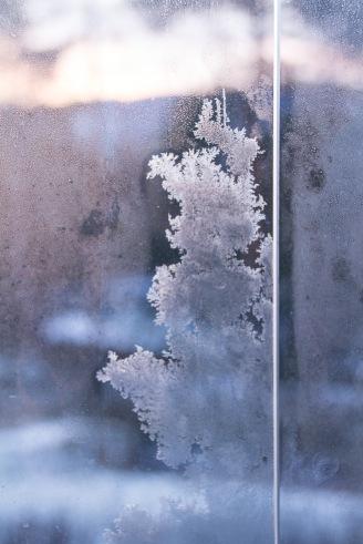 frost, vinter, rim, soloppgang, ansikt, natur, sol, soloppgang, veranda, Oslo,