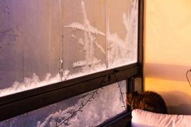 Katt som ser ut gjennom et vindu med rim. Foto Kari-Anne Flor