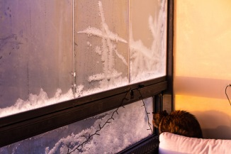 Cat looking through a frosted window.